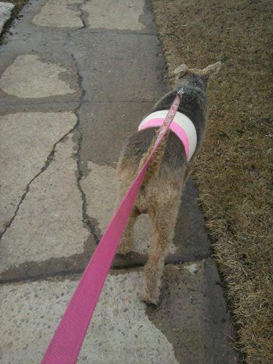 sheena in pink