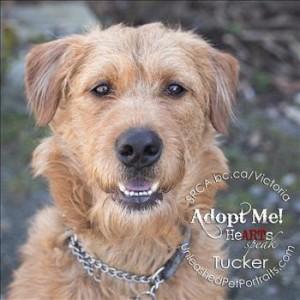Tucker2